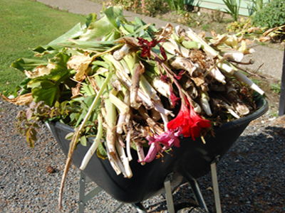 Wheel barrow of garden waste